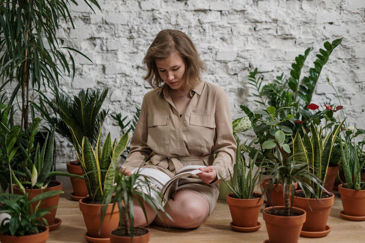 Feng Shui : quelles plantes choisir pour équilibrer votre intérieur ?