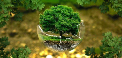 Tout savoir sur l'arbre de vie