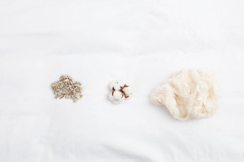 GOTS, meilleure certification pour le coton biologique
